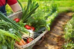 Fazendeiro que guarda a cesta com legumes misturados Foto de Stock Royalty Free