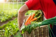 Fazendeiro que guarda a cesta com os vegetais no jardim Imagem de Stock Royalty Free