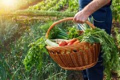 Fazendeiro que guarda a cesta com vegetais Fotografia de Stock