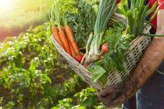 Fazendeiro que guarda a cesta com vegetais Fotos de Stock