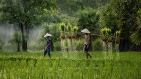 Fazendeiro que guarda a plântula do arroz para a plantação com sua filha Foto de Stock Royalty Free