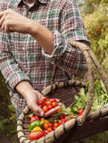 Fazendeiro que guarda uma cesta com os vegetais escolhidos frescos Foto de Stock Royalty Free