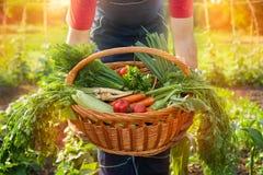 Fazendeiro que guarda uma cesta com vegetais Fotos de Stock Royalty Free