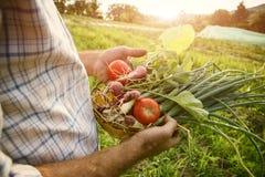 Fazendeiro que guarda vegetais escolhidos frescos Imagem de Stock