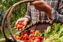 Fazendeiro que guardam a cesta de madeira e produto disponivel Foto de Stock Royalty Free