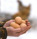 Fazendeiro que guardara ovos orgânicos Fotografia de Stock Royalty Free