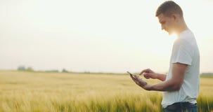 Fazendeiro que olha seu campo do centeio e que usa sua tabuleta digital video estoque