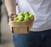 Fazendeiro que prende uma cesta de ameixas verdes frescas Fotos de Stock