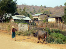 Fazendeiro que puxa o búfalo Imagens de Stock
