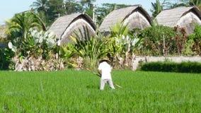 Fazendeiro que trabalha duramente no campo do arroz em Bali filme