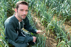 Fazendeiro que trabalha em um campo do alho-porro Fotos de Stock Royalty Free