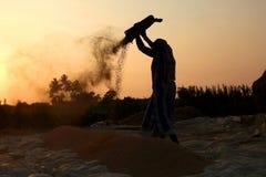 Fazendeiro que trabalha em um campo do arroz no por do sol Imagens de Stock Royalty Free