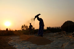 Fazendeiro que trabalha em um campo do arroz no por do sol Fotos de Stock Royalty Free