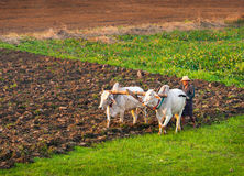 Fazendeiro que trabalha no campo Foto de Stock Royalty Free