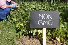 Fazendeiro que trabalha no jardim vegetal orgânico Fotos de Stock Royalty Free