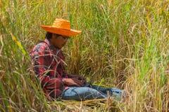 Fazendeiro que usa o portátil do computador que procura no campo do arroz foto de stock royalty free