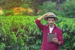 Fazendeiro que usa o tablet pc digital na plantação cultivada do campo do café Foto de Stock