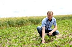 Fazendeiro que verifica o campo do feijão de soja fotografia de stock