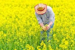 Fazendeiro Standing no campo agrícola cultivado colza da semente oleaginosa Imagens de Stock