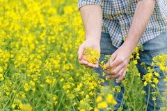 Fazendeiro Standing no campo agrícola cultivado Rapseed da semente oleaginosa foto de stock royalty free