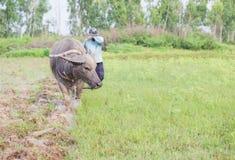 Fazendeiro tailandês Foto de Stock Royalty Free