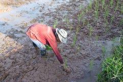 Fazendeiro tailandês Fotografia de Stock