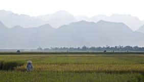 Fazendeiro vietnamiano no campo do arroz Imagem de Stock