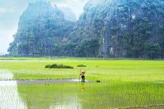 Fazendeiro vietnamiano que trabalha no campo do arroz Ninh Binh, Vietnam Imagens de Stock Royalty Free