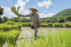 fazendeiros imagem de stock royalty free