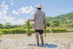 fazendeiros fotos de stock
