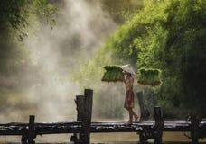 fazendeiros foto de stock royalty free