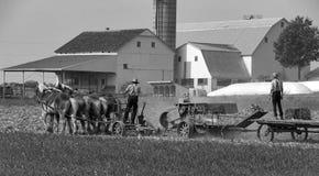 Fazendeiros Amish que colhem os campos fotos de stock
