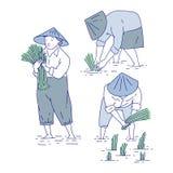 Fazendeiros chineses que plantam plântulas do arroz Linha pessoa do grupo do vetor da arte na cultura agrícola asiática do traje  ilustração stock