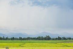 fazendeiros da planta de arroz que plantam o arroz Fotos de Stock