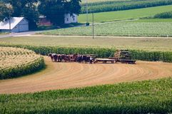 Fazendeiros de Amish que colhem a colheita 3 fotos de stock