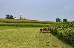 Fazendeiros de Amish que colhem a colheita 2 fotos de stock