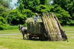 Fazendeiros de Amish que fazem o feno imagem de stock