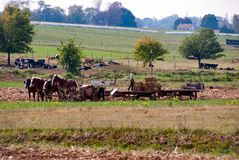 Fazendeiros de Amish que trabalham com lá os cavalos fotografia de stock