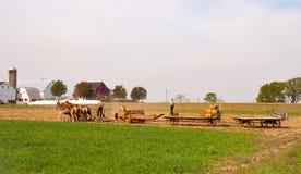 Fazendeiros de Amish que trazem no feno imagem de stock