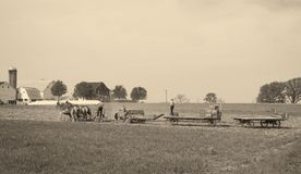 Fazendeiros de Amish que trazem no feno imagem de stock royalty free