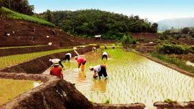 Fazendeiros em Tailândia Imagem de Stock