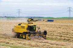 Fazendeiros holandeses com a maquinaria agrícola que colhe um campo de trigo Fotografia de Stock Royalty Free