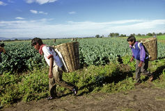 Fazendeiros mexicanos imagens de stock