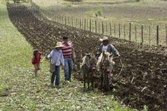 Fazendeiros mexicanos fotos de stock