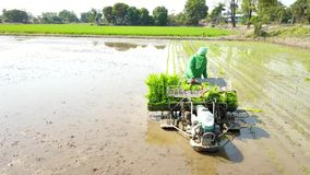 Fazendeiros modernos das fotografias aéreas para usar máquinas para crescer o arroz, o tempo de trabalho de salvamento e os incre video estoque
