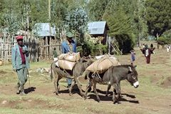 Fazendeiros na estrada com colheita e asnos de grão fotografia de stock royalty free
