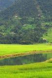 Fazendeiros na reflexão da água, lago do fewa, nepal Foto de Stock