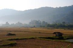 Fazendeiros no campo de almofada em Laos Foto de Stock Royalty Free