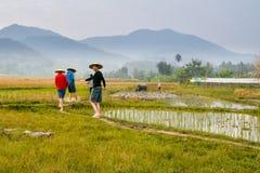 Fazendeiros no campo do arroz em Laos imagens de stock royalty free