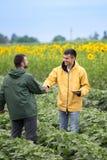 Fazendeiros que agitam as mãos no campo fotos de stock royalty free